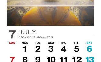 56tan_2013_07-01